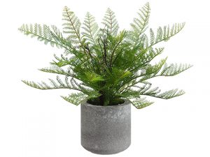 "15"" Lace Fern in Cement Pot Green"