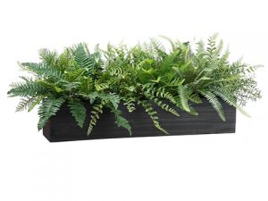 "16""H Mixed Fern in Wood Box Green"
