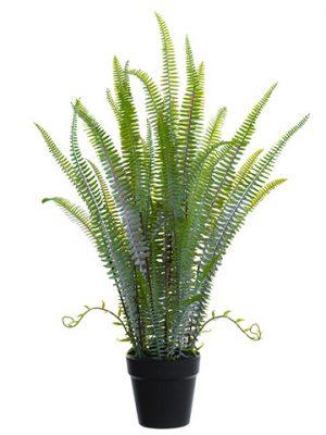"30"" Sword Fern Plant inPlastic PotGreen"