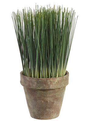 "10"" Grass in Terra Cotta Pot Green"