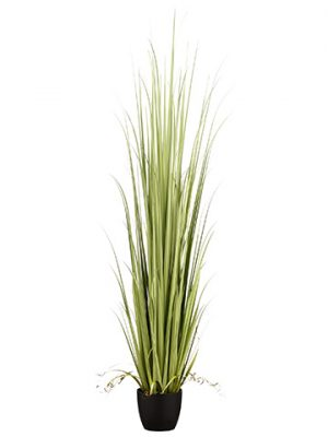 "84"" Reed Grass in Pot Light Green"