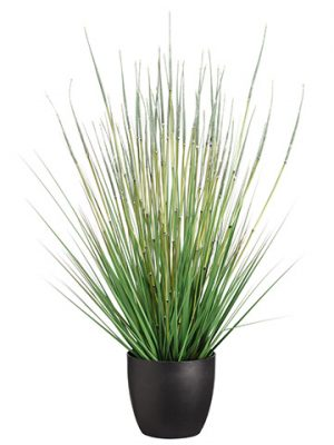 "34"" Grass/Horse Tail Bush in Pot Green"