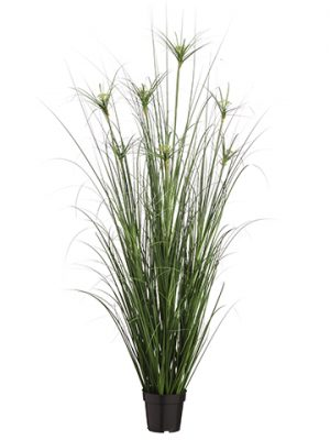"60"" Cypress Grass Bush in Pot Green"