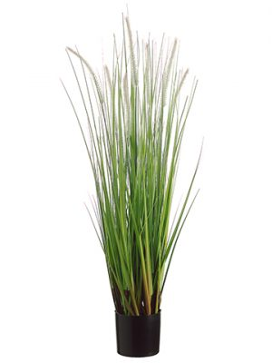 "36"" Dog Tail Grass x7 in Pot Green Brown"