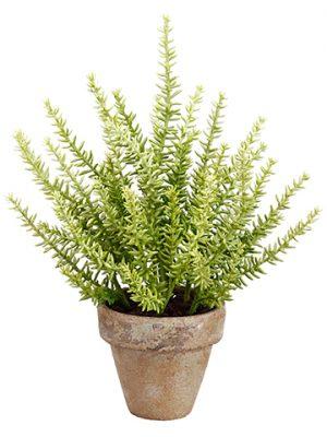 "12"" Sedum in Clay Pot Green"