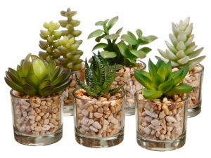 "3-4"" Succulent in Glass Vase Assortment (6 ea/set) Two Tone Green"