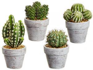 "5-7.25"" Cactus in Ceramic Pot(4 Styles/set)Two Tone Green"