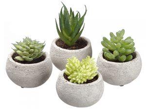 """3.5""""H Assorted Succulent inCement Pot (4 ea/set)Two Tone Green"""