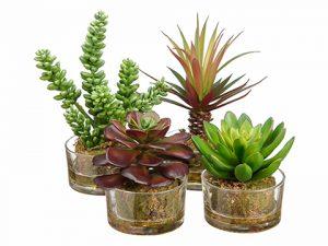 """4.5""""-8"""" Succulent Garden inGlass Vase (4 Styles/Assorted)Assortment"""