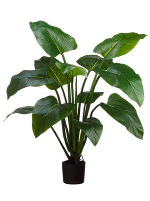 4' EVA Curcuma Plant with 12Leaves in Plastic PotGreen