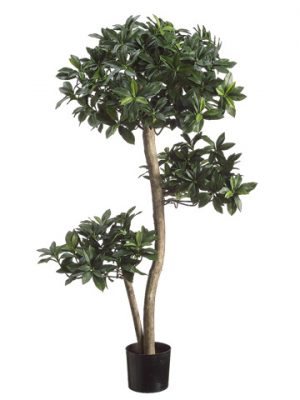 3' Euonymus Japonicus Tree in Plastic Pot Two Tone Green