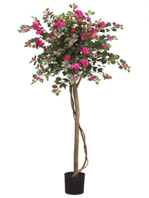 "4.5"" Bougainvillia Tree With1194 Leaves in PlasticNursery Pot Beauty Green"