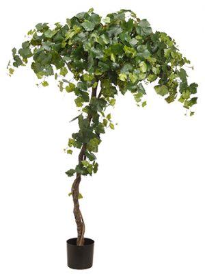 "80"" Grape Tree in PlasticNursery PotGreen"