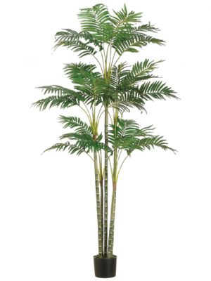 6' Areca Palm Tree x26 in Plastic Pot Green