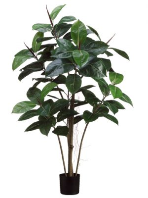 4' Rubber Plant x5 with 84Leaves in Black Plastic PotGreen
