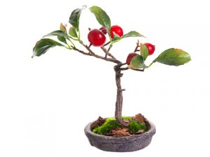 "6"" Rose Hip Bonsai in Clay Plate Red"