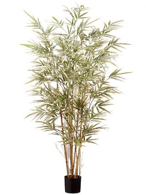 4' Bamboo Tree x7 in Pot With 960 Leaves Variegated