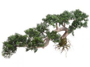 """18"""" Trailing Cedar Bonsai Green"""