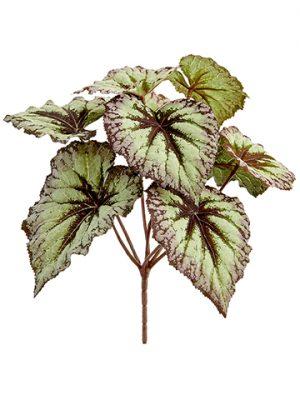 """9"""" Begonia Leaf BusH x 7 Green Purple"""