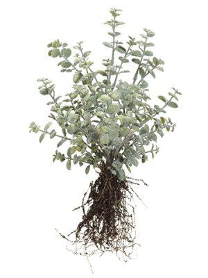 "15"" Button Leaf Bush Green Gray"