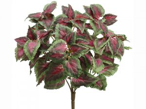"15"" Coleus Bush Green Red"