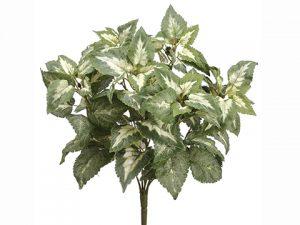 "15"" Coleus Bush Green Variegated"