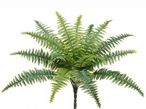 "17"" Boston Fern With 15 Leaves Green"