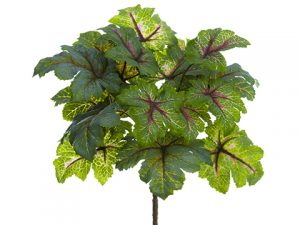 "11"" Heuchera Bush Green Mauve"