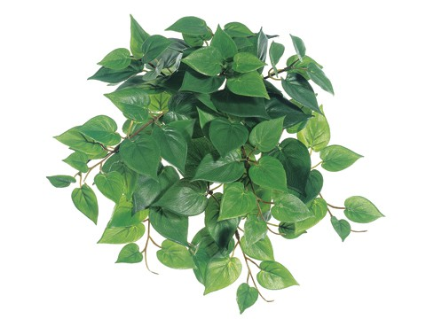 "12"" Medium Philodendron Hanging BusH x 9 with 106 Leaves Two Tone Green"