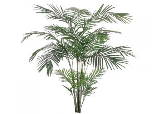 6' Tropical Areca Palm x4 with 705 Leaves