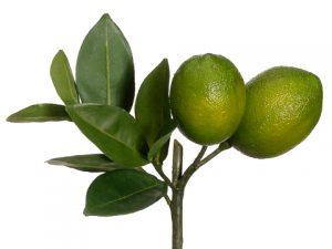 "8.5"" Lime Pick Green"