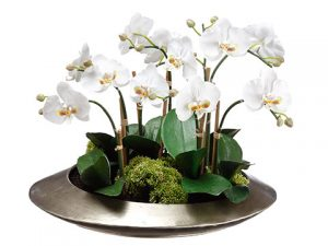 "14""H x 19""W x 19""L Phalaenopsis And Sedum in Metal Container White"