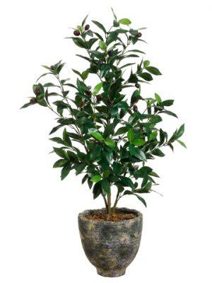 """36""""H x 18""""W x 18""""L Olive Tree InPotTwo Tone Green"""