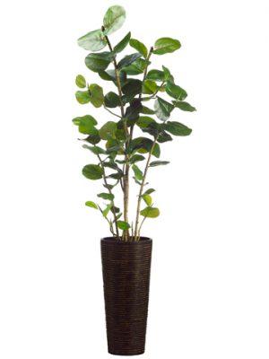 """75"""" Eva Sea Grape Plant inBamboo/Rope ContainerGreen"""