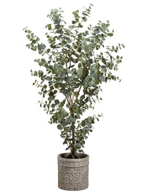 5' Eucalyptus in Cement Planter Green