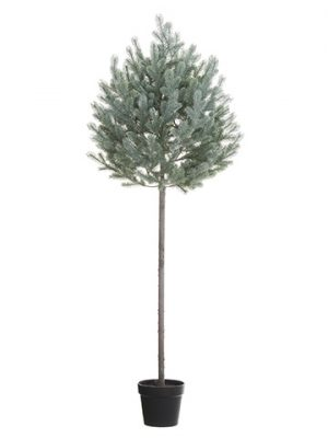 "67"" Blue Spruce Tree Topiaryin Nursery PotGreen Gray"