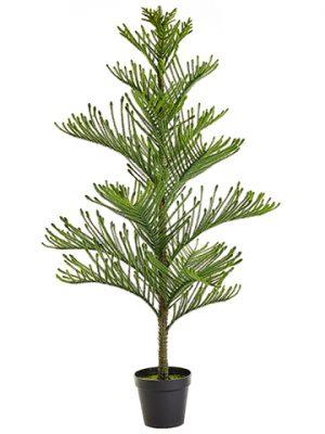 "60"" Norfolk Pine Tree inPlastic Nursery PotGreen"