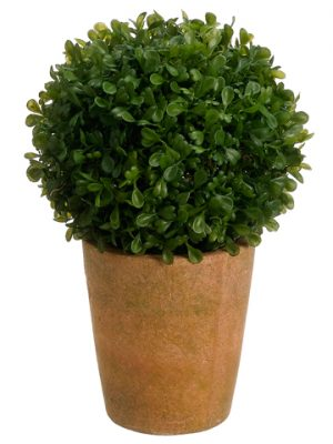 "10"" Boxwood Ball in Terra Cotta Pot Green"