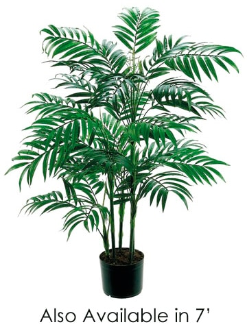 7' New Bamboo Palm Treew/1802 Leaves in PotGreen