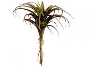 "8.5"" Tillandsia Green Burgundy"