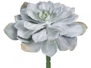 "8""H x 14""D Echeveria Pick Gray Green"