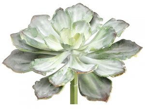 "8""H x 10.5""D Echeveria Pick Green Gray"