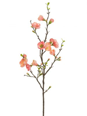 """35"""" Quince Blossom Spray Two Tone Coral"""