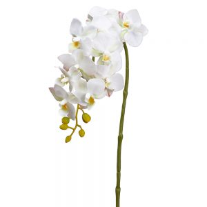 "22"" Small Phalaenopsis Orchid Spray White"
