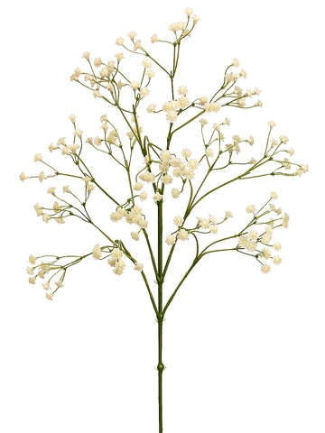 "26"" Gypsophila Spray Cream"