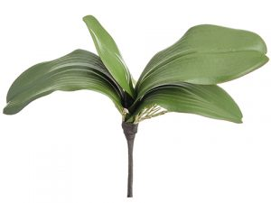 "10"" Soft Phalaenopsis Orchid Leaf Plant With 4 Leaves Green"