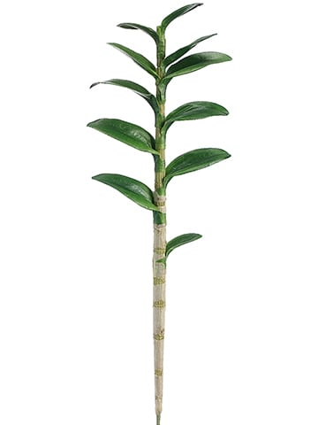 """29"""" Dendrobium Orchid LeafPlant With 11 LeavesGreen"""