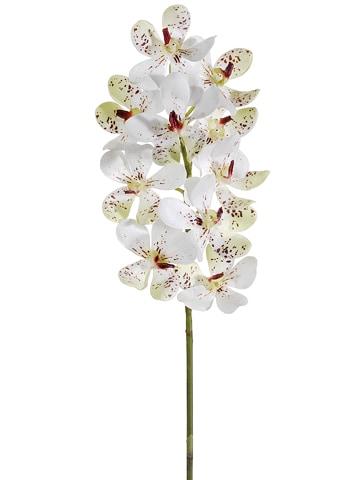 "23"" Vanda Orchid Spray Cream Burgundy"