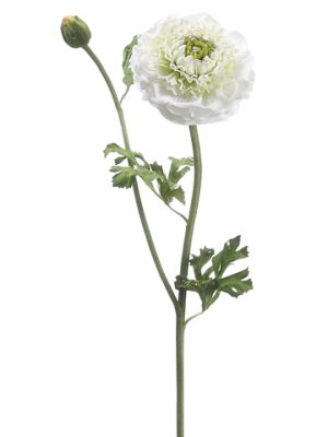 "21"" Ranunculus Spray Cream Green"