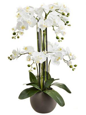 "33.5"" Phalaenopsis OrchidPlant x9 in Terra Cotta PotWhite"